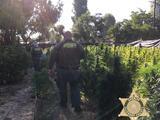 Matan a tiros a 7 personas en una casa donde sembraban marihuana ilícita en California