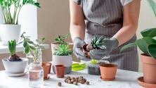 ¿Cómo multiplicar tus plantas?