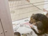 """""""Se olvidan de ellos"""": Piden a personas con órdenes de desalojo que les encuentren familia a mascotas"""
