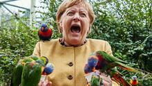 Se viraliza la imagen de la canciller Angela Merkel al ser 'picoteda' por un loro