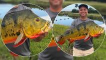 Hombre captura un gigantesco pez y bate récord en Florida