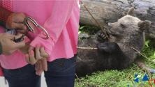 Mujer enfrenta cargos por alimentar a un oso con dulces en un video de TikTok