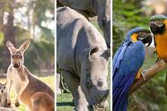 En este zoológico también se encuentran canguros, rinocerontes y guacamayas.