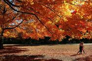 Este miércoles empieza el otoño, el día del equinoccio de la nueva estación