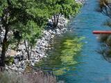 """""""No se acerque"""": algas tóxicas proliferan en lago del condado de Los Ángeles"""