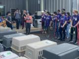Decenas de perros llegan a San Antonio ante la llegada del huracán Ida a las Costas del Golfo