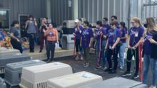San Antonio recibe a más de 100 mascotas de Luisiana, víctimas del huracán Ida