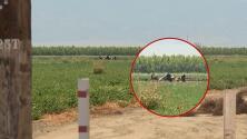 Helicóptero se estrella en el condado Colusa y mueren sus cuatro pasajeros
