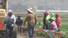 Trabajadores del campo abrigan la esperanza de una legalización gracias a una medida propuesta por un congresista