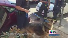 Rescatan a mascota olvidada en auto