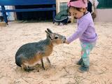 ¿Piensas visitar un zoológico? Así puedes prevenir las enfermedades transmitidas por animales