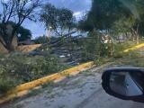 """""""Miren como amaneció; no tenemos árboles"""": tormenta causa severos destrozos en Nuevo Laredo"""