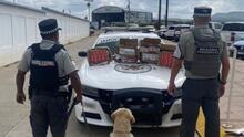 Más de 6,000 cartuchos y armas largas: Perro de la Guardia Nacional encuentra armamento en Zacatecas