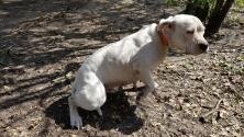 Rescatan 16 perros que se encontraban desnutridos y sin atención