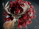 El coronavirus afecta la vida silvestre: ciervos dan positivo en la prueba de anticuerpos en Pensilvania