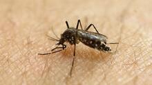 Florida liberará más de 140,000 mosquitos modificados genéticamente para matar hembras que trasmiten enfermedades