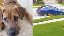 Lo baja del auto y se marcha: así es como un hombre abandona a un perro en Houston