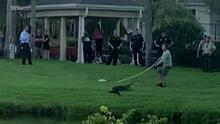 Un cocodrilo de siete pies de largo ataca a una mujer mientras paseaba a su perro en Florida