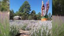 Esta boutique al norte de Arizona cuenta con una granja de flores de lavanda