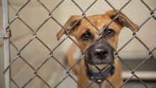 Texas es el estado donde se sacrificaron más animales en refugios durante el 2020