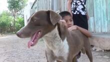 'Cuchufleto', el perro triste que llora mientras espera a su dueño, uno de los fallecidos en la mina de México