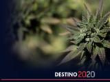El uso recreativo de la marihuana será una realidad en Arizona tras el triunfo de la proposición 207
