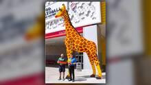 Jirafa del Zoológico de San Francisco elige nombre para su doble de 20 pies armada con Legos