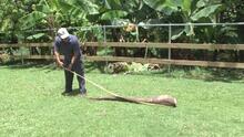 Agricultor de Moca cosecha yuca de 35 libras