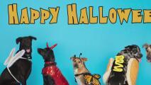 Consejos para mantener a salvo a las mascotas durante Halloween